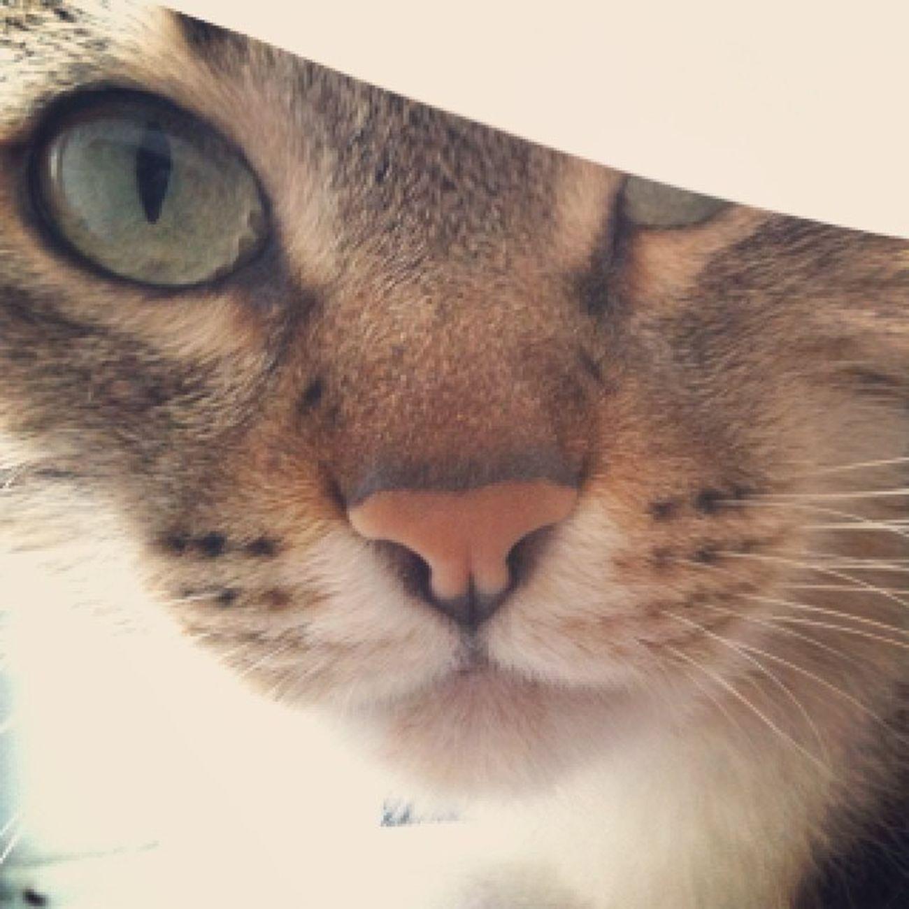 Instacat Instakitten Sweet Cat mycat white light green eyes cateyes noise instakedi tagsfortags