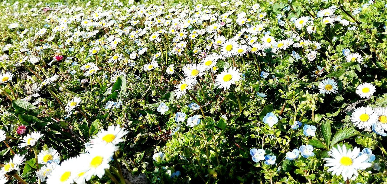 Daisies :) Daisies Simplicity Light Flowers Flower Collection White Green Nature Nature_collection Nature_perfection Magic Colors EyeEm Best Shots EyeEm Gallery Eye4photography  Eyeemphotography EyeEm Nature Lover Taking Photos Relaxing Beautiful Nature Spring Spring Collection Beautiful Day Wednesday Morning Italy