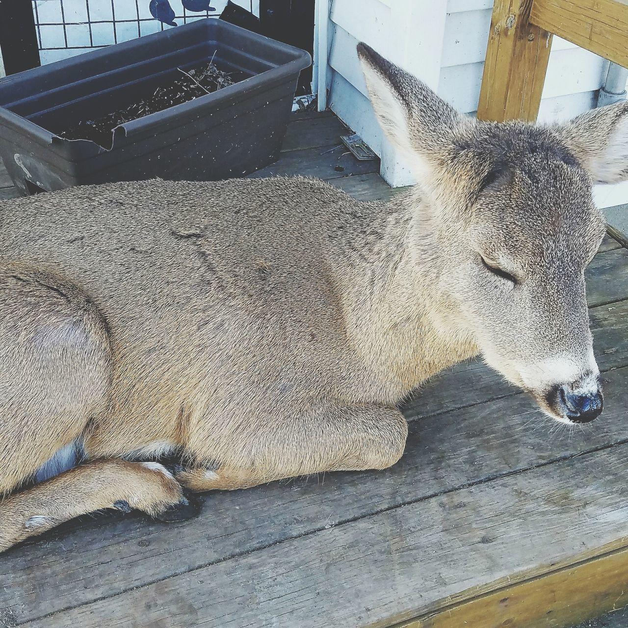 Animal Themes Taking Photos Beauty In Nature Farmland Deer Deerselfie