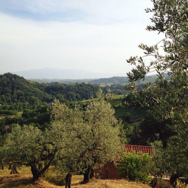 Olevano Romano Great View