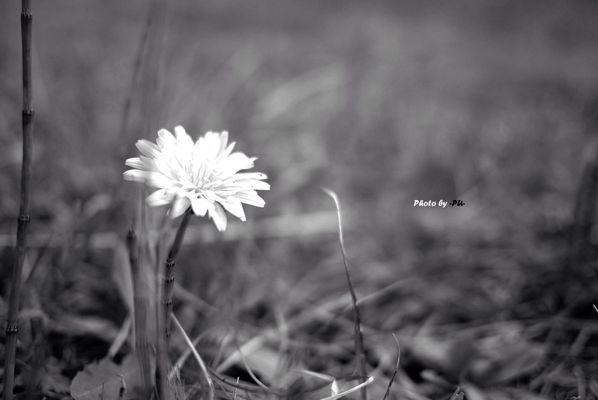 Photo by Shad⭕w_PU