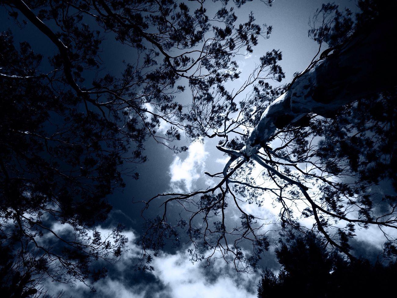 TreePorn Sky_collection