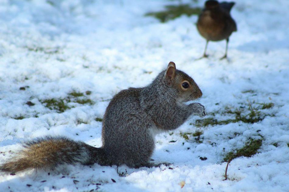 Beautiful stock photos of squirrel, Alertness, Animal Themes, Biggleswade, Brown