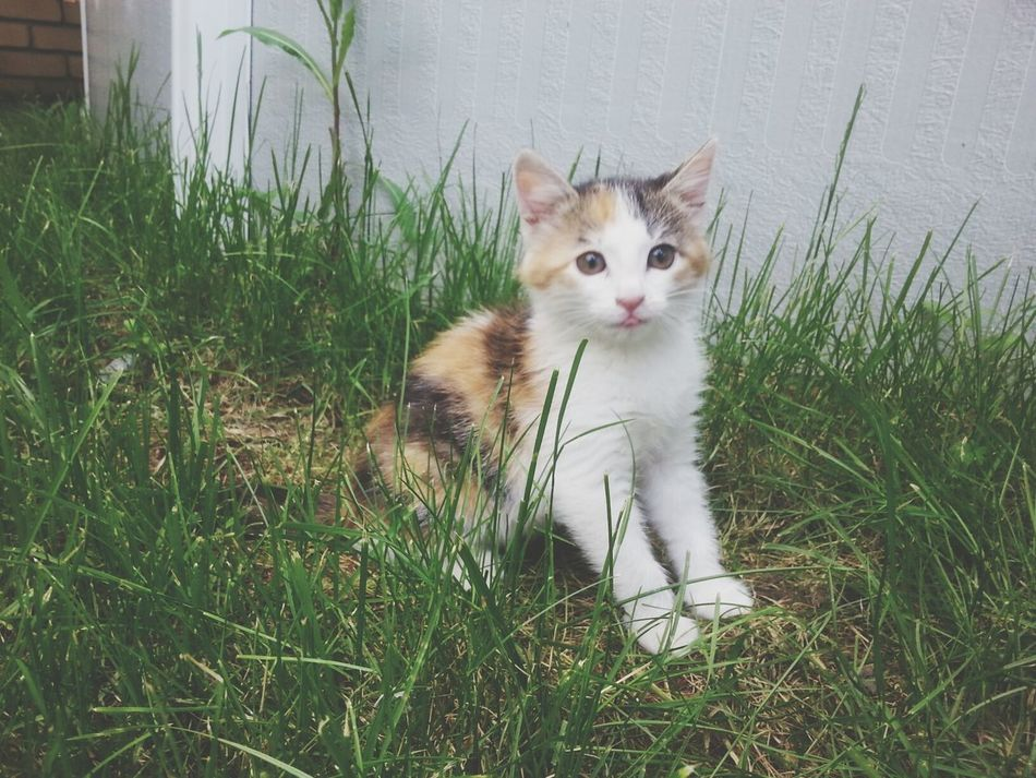 Mycat Kitten Cat Little #2monthsago