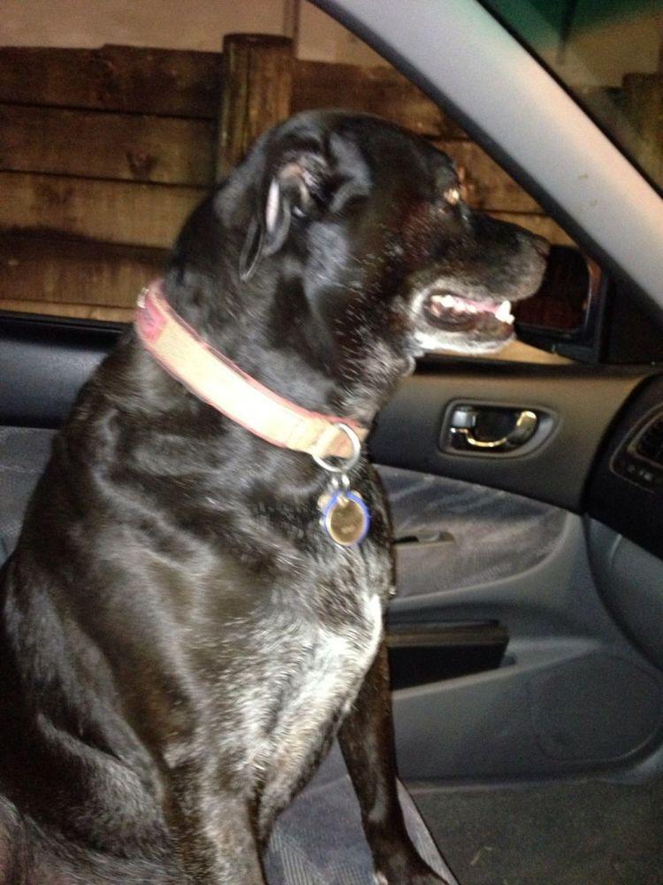 My Dog Co Driver