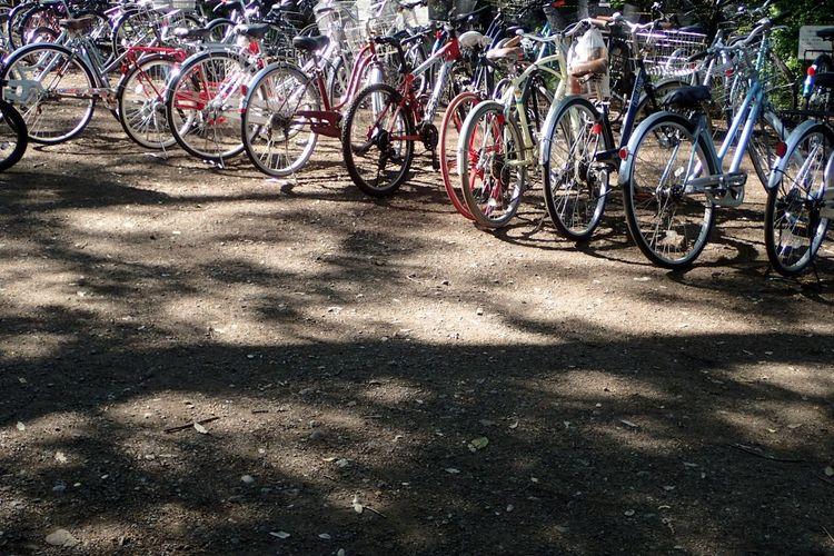 CyclingUnites Bicycle Sunlight Shadow No People Outdoors Bicycle Rack Day Group Transportation Mode Of Transportation Park Parking Area Inokashira Park Kichijoji Tokyo Rows Repetition Sun Dappled Beautifully Organized