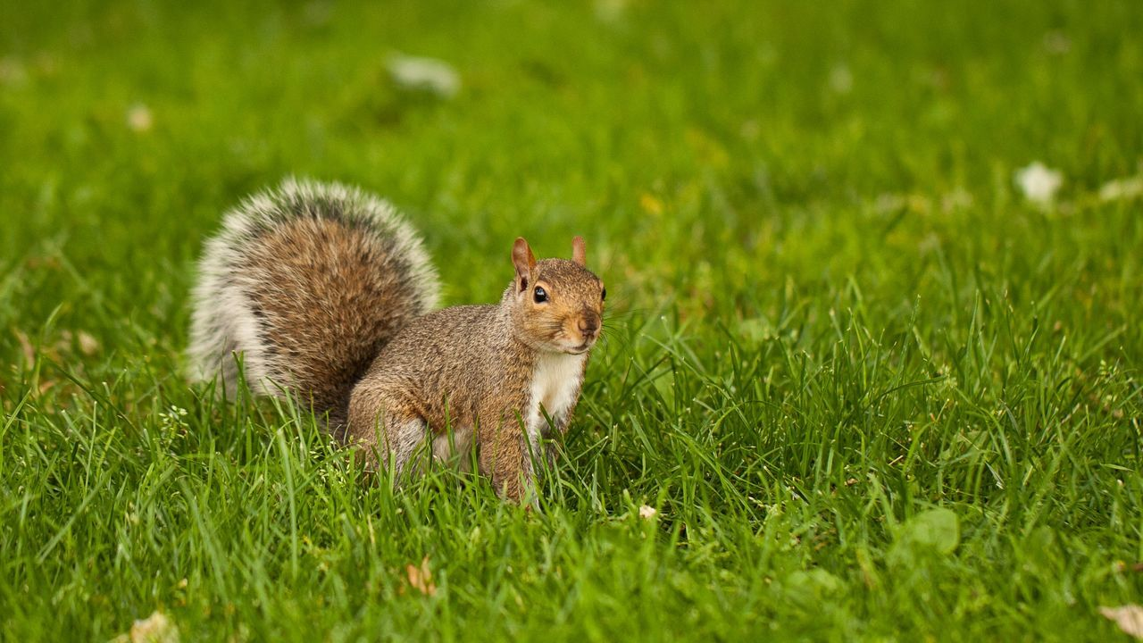 Beautiful stock photos of squirrel, Animal Hair, Animal Themes, Animals In The Wild, Beauty In Nature