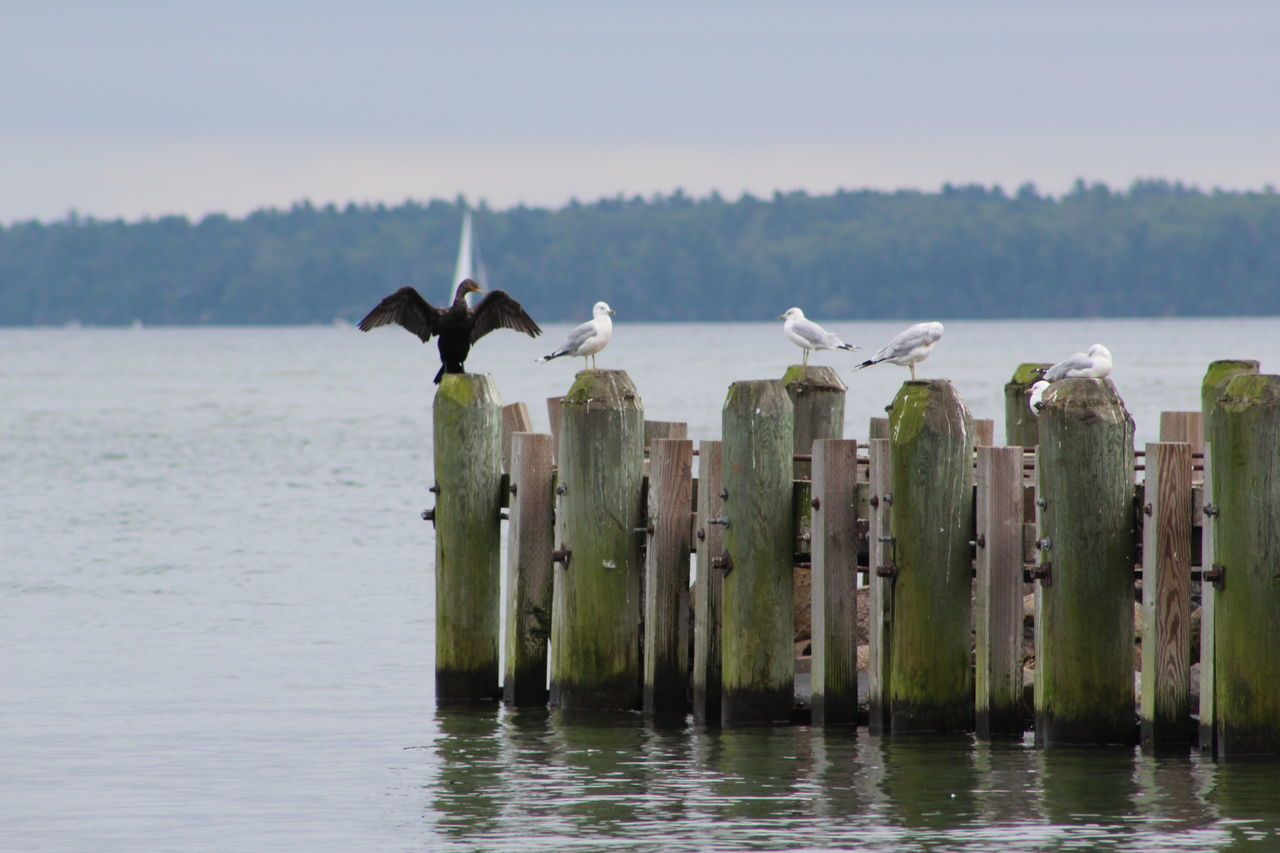Beauty In Nature Bird Lake Superior Nature Pole Tranquil Scene Water Wooden Post