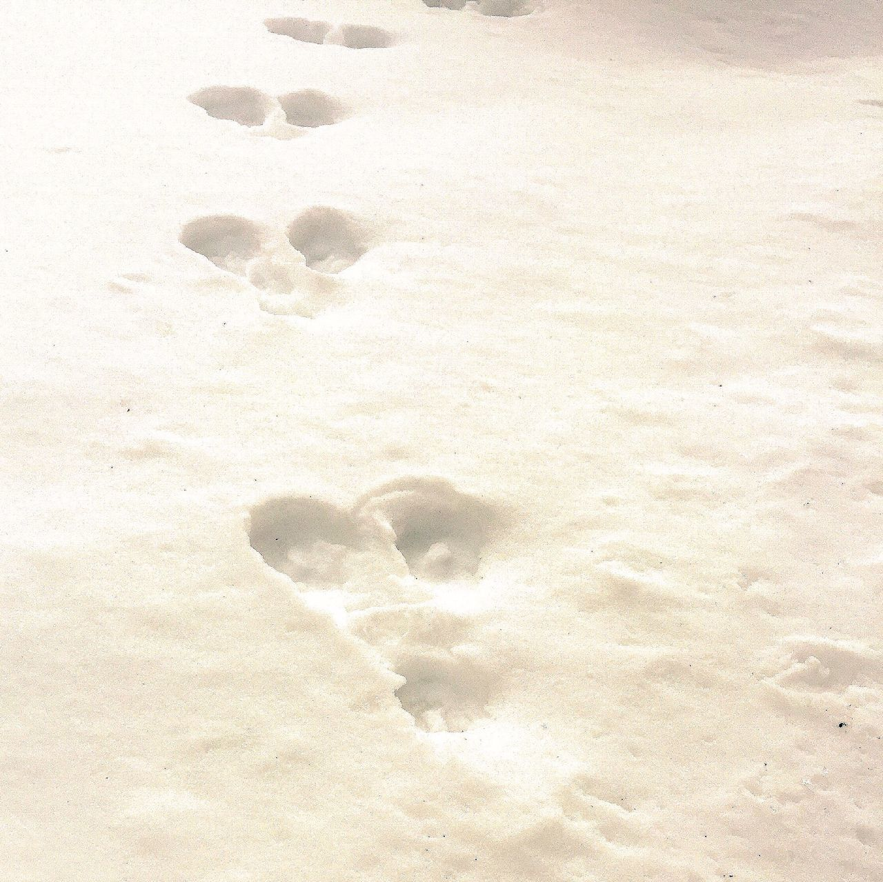 Whose is footprint??? Snow Winter White Footprints In The Snow