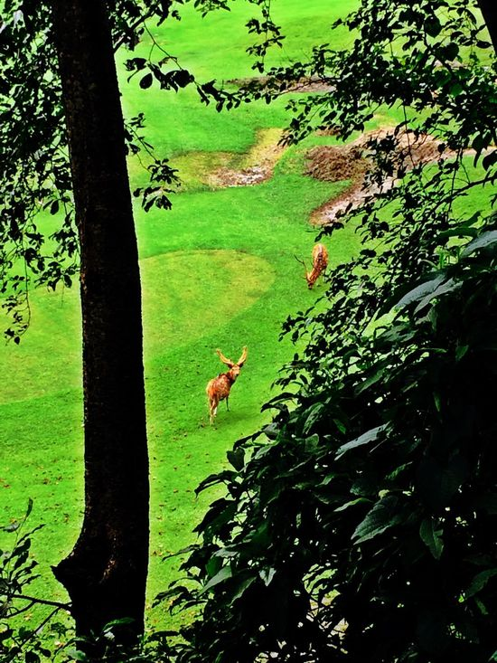 Beautiful Surroundings Golf ⛳