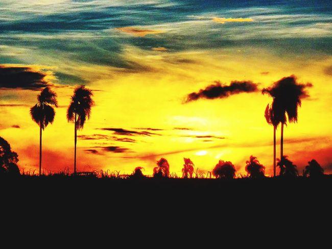 Avare SP BRASIL 🇧🇷☀️ Avare Heaven Sunset #sun #clouds #skylovers #sky #nature #beautifulinnature #naturalbeauty #photography #landscape EyeEmBestEdits EyeEm Best Shots EyeEmBestPics Special👌shot First Eyeem Photo Eye4photography  EyeEm Nature Lover
