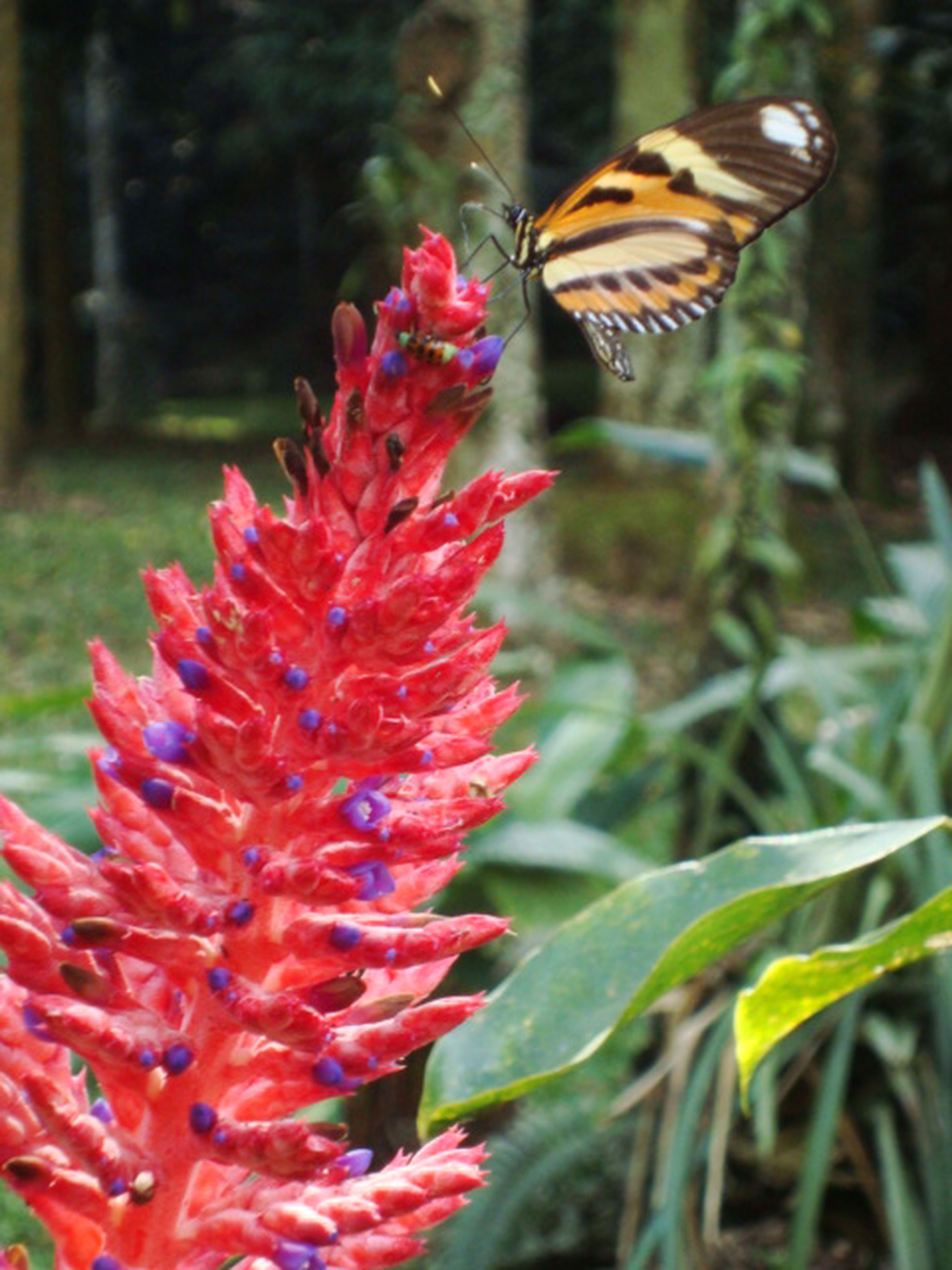 flower, animal themes, animals in the wild, focus on foreground, one animal, wildlife, insect, petal, freshness, fragility, growth, beauty in nature, close-up, plant, nature, butterfly - insect, flower head, blooming, park - man made space, red