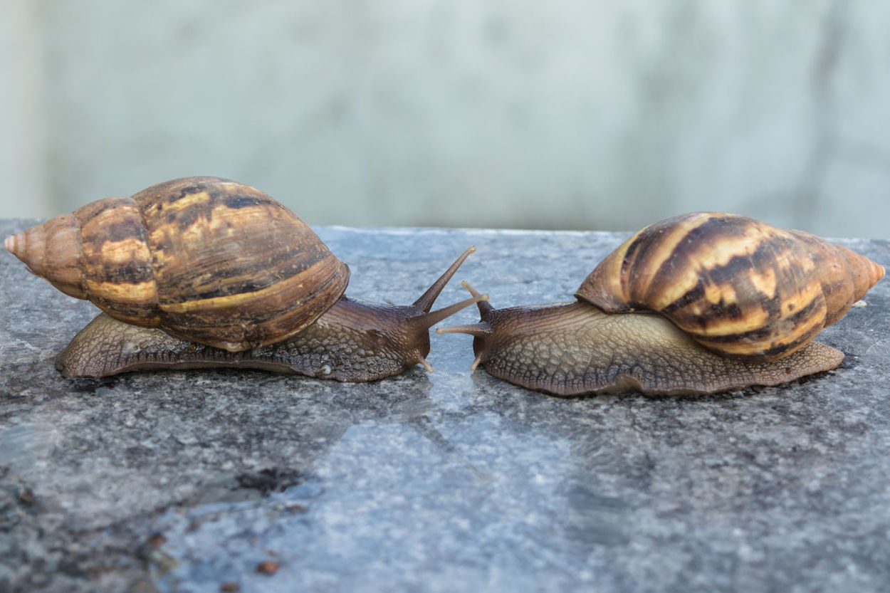 Nature Beauty In Nature Snails In Shells Snail Life Snail🐌