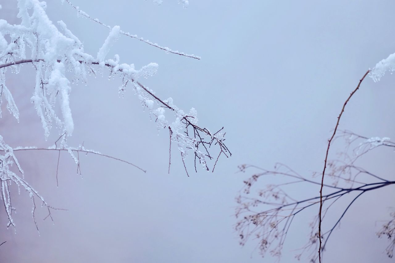 winter, cold temperature, nature, beauty in nature, snow, branch, frozen, no people, day, outdoors, tree, fragility, sky, bare tree, clear sky, close-up, water, freshness