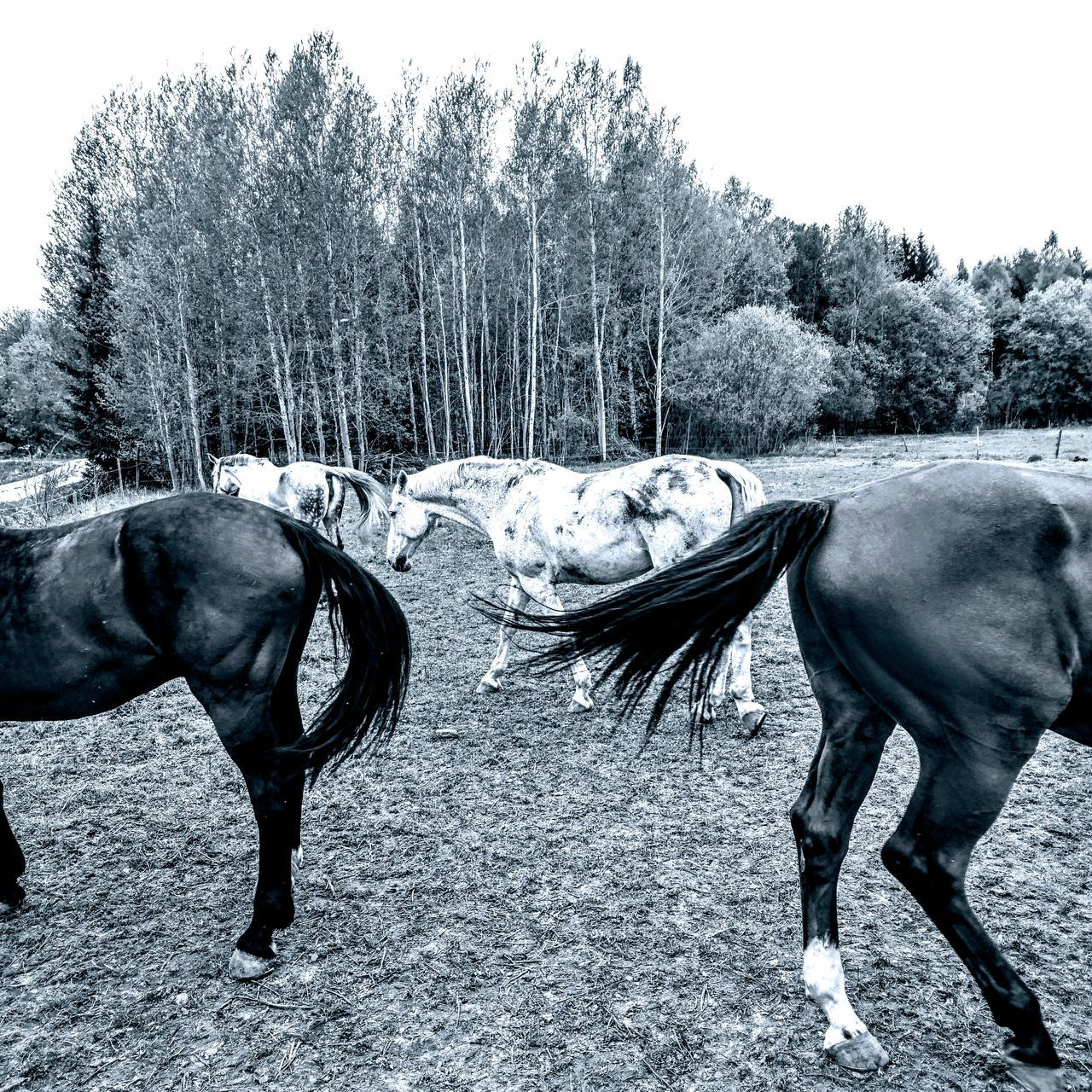 Animal Themes Horse Domestic Animals Mammal No People Outdoors Working Animal Animals In The Wild Full Length Livestock Adult Animal Landscape Tree Day Nature Sky