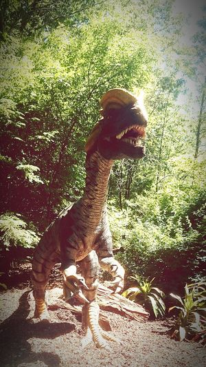 Animals Check This Out Share Your Adventure The Adventure Handbook Taking Photos Animals Being Adventurous Dinosaurs Filled With Dinosaurs