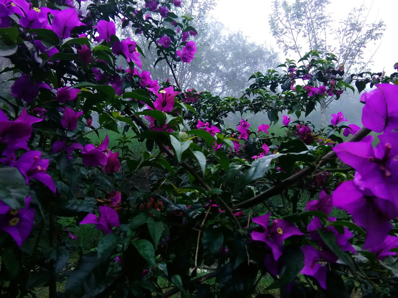 Flowers Cold Wheather Purple Plant Beauty In Nature Day Outdoors