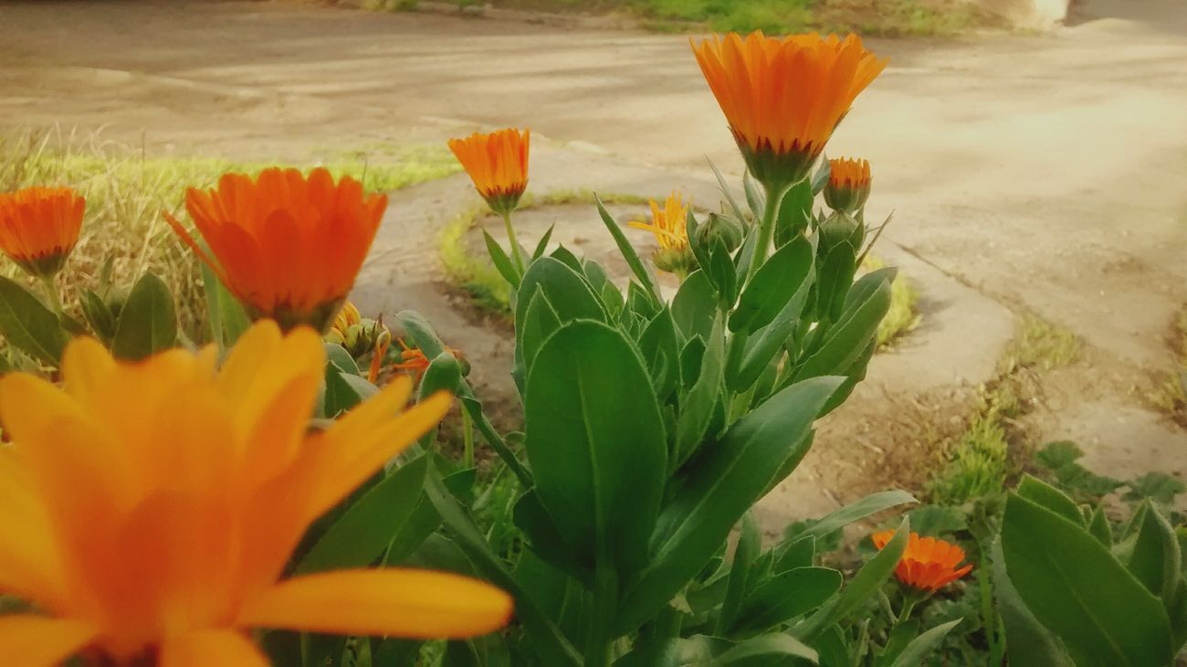 Flowers Nature_collection Nature Phoyography Taking Photos Relaxing Hello World Summer Views Cool_capture_