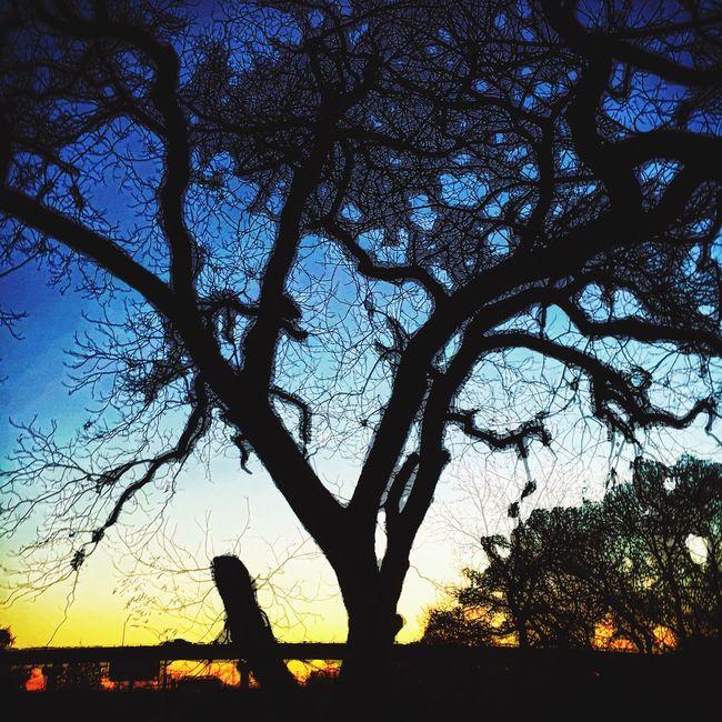 Enlight TreePorn Silhouette Sunset Katy Trail