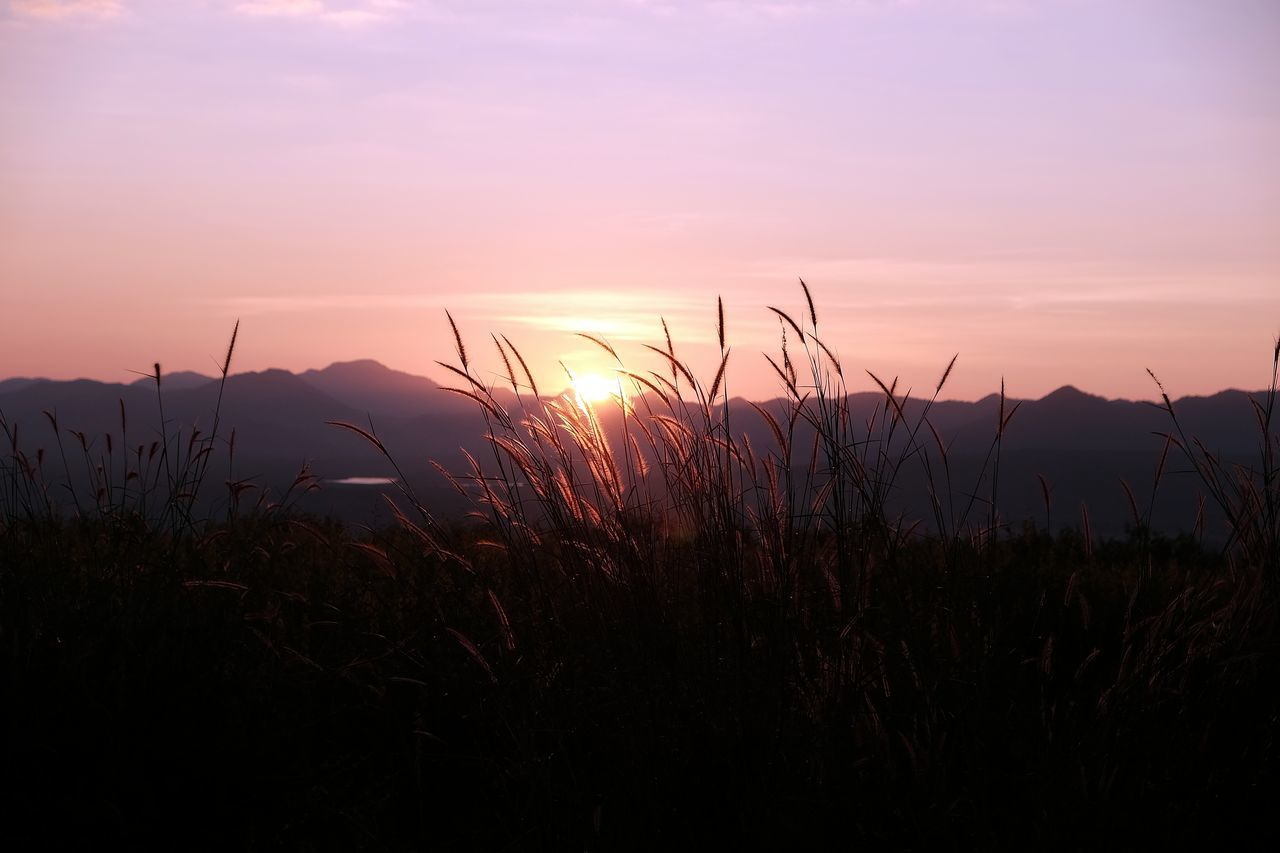 Beauty In Nature Close-up Day Dusk Growth Landscape Morning Mountain Nature No People Outdoors Plant Scenics Silhouette Sky Sun Sunset Tranquility