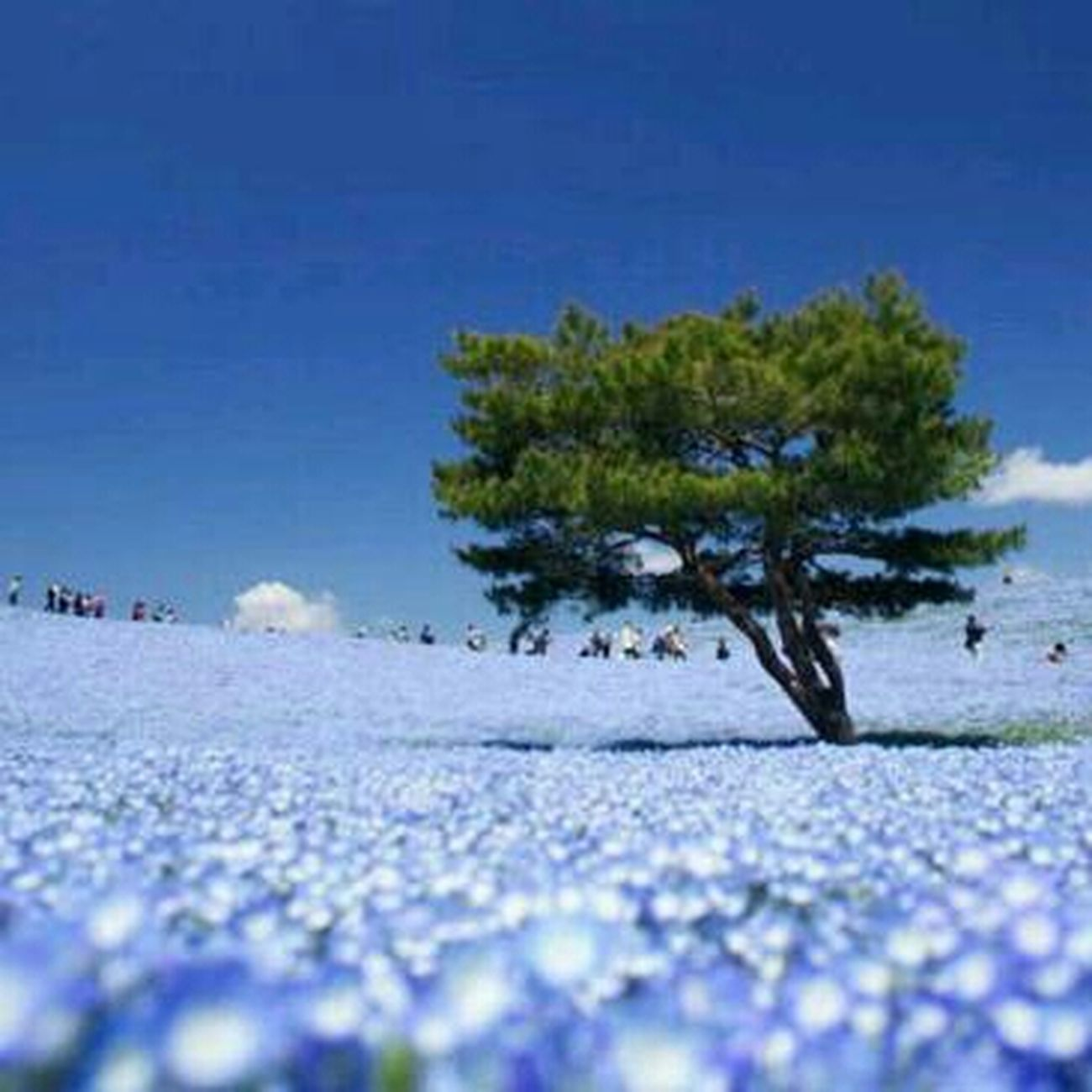 Nature Cheese! Huggingatree
