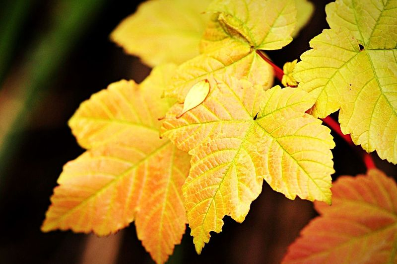 Winters Day Leaves Leaves🌿 Leavesporn Leaves_collection Nature Colorful Garden & Nature