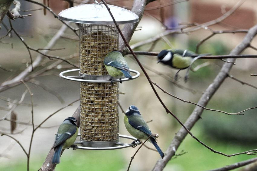 Animal Themes Animals In The Wild Bird Photography Birdfeeding Birds Birds In Flight Birdwatching Branch Close-up Day Focus On Foreground Hanging Metal Metallic Nature No People Outdoors Photography In Motion Selective Focus Twig Wildlife Tomtit