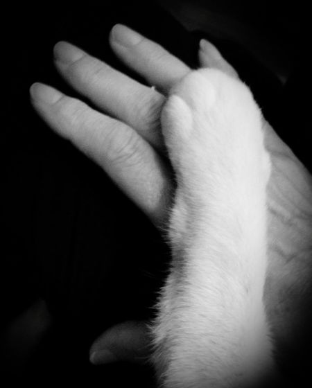 Monochrome Photography He Loves Holding My Hand One Animal Person Domestic Animals Part Of Pets Mammal Close-up Indoors  Cropped Domestic Cat Touching Holding Stroking Human Finger Pet Owner Zoology Paw Care Feline Pampered Pets Check This Out Fine Art Photography Still Life Photography