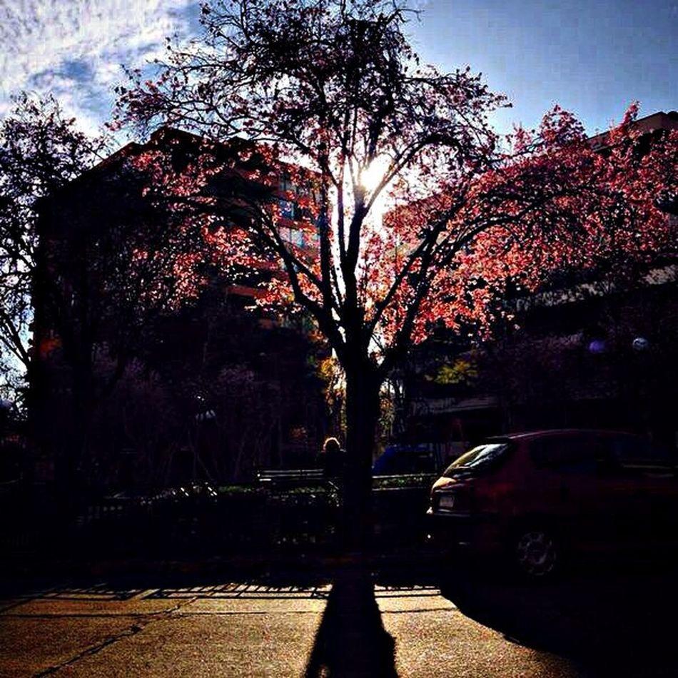 """""""Si supiera que el mundo se acaba mañana, yo, hoy todavía, plantaría un árbol."""" -Martin Luther King Enjoying The View Trees Enjoying Life Taking Photos"""