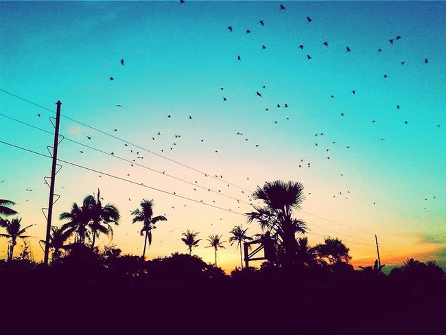 The Moment - 2015 EyeEm Awards When birds spread their wings and break free. Loving this moment. Skylovers EyeEm Birds Breakfree Dawn Life In Motion