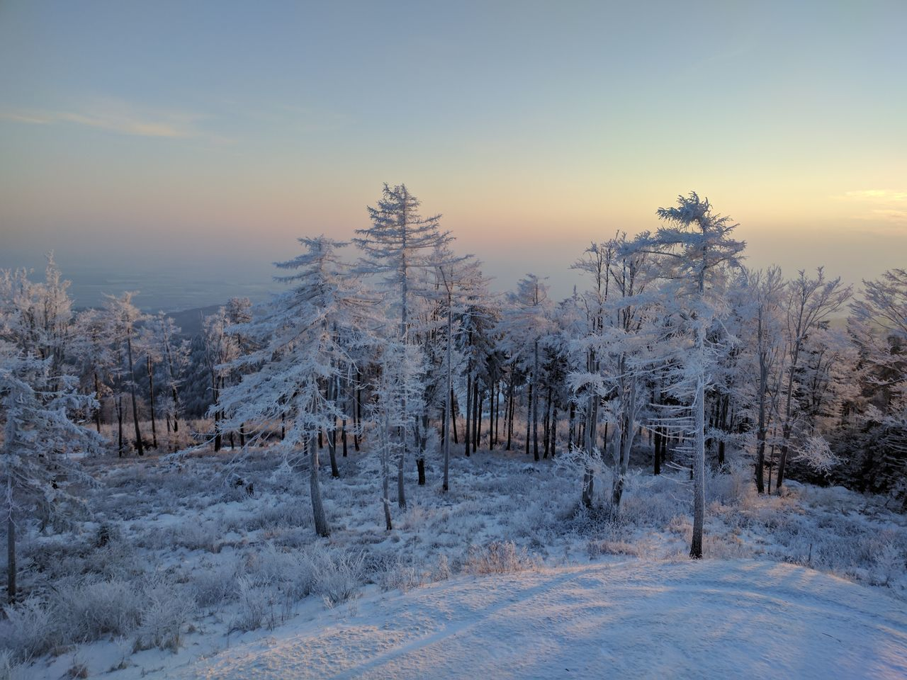 Winter Tree Cold Temperature Snow Sunset Landscape No People Forest Nature Branch Outdoors Sky Beauty In Nature Day
