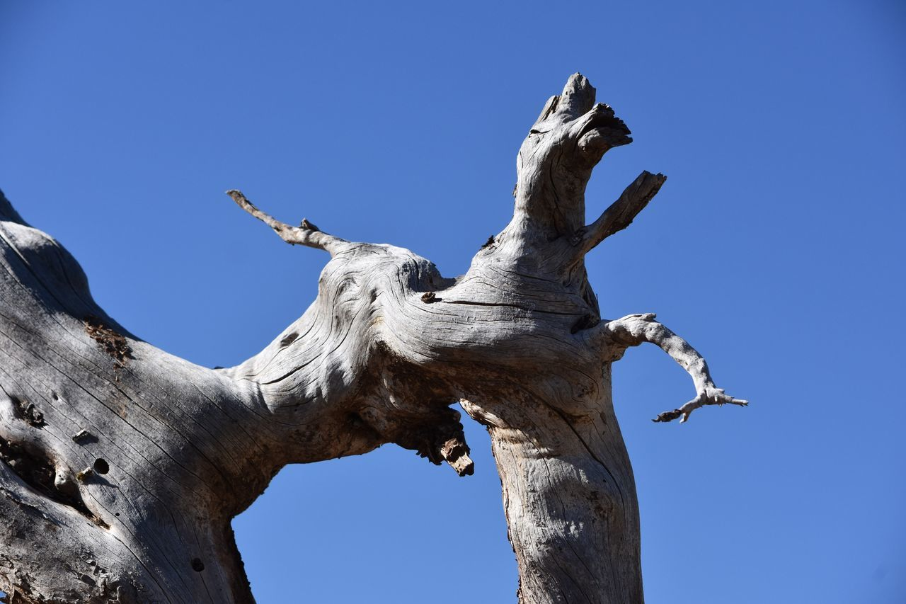 Into The Woods Low Angle View Sculpture Statue Day No People Blue Sunlight Outdoors Tree Tree Trunk Clear Sky Branch Bare Tree Dead Tree Nature Sky Animal Themes Close-up Respect For The Good Taste EyeEm Best Shots Let's Do It Chic! Exceptional Photographs