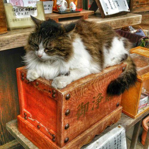 もっふ~♪ 猫 神社 ねこ Shrine 賽銭箱 もふもふ 猫神様 Cat Gardian Traveling
