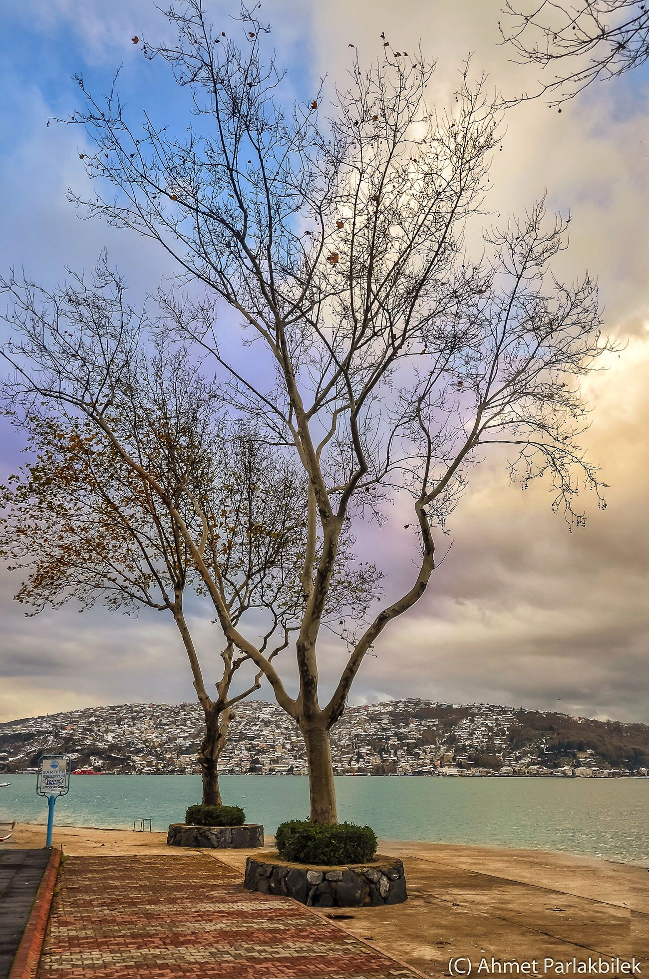 Kireçburnu Tree Sea Nature Water Sky Bare Tree Scenics No People Tranquility Tranquil Scene Outdoors Beauty In Nature Branch Day Horizon Over Water Beach