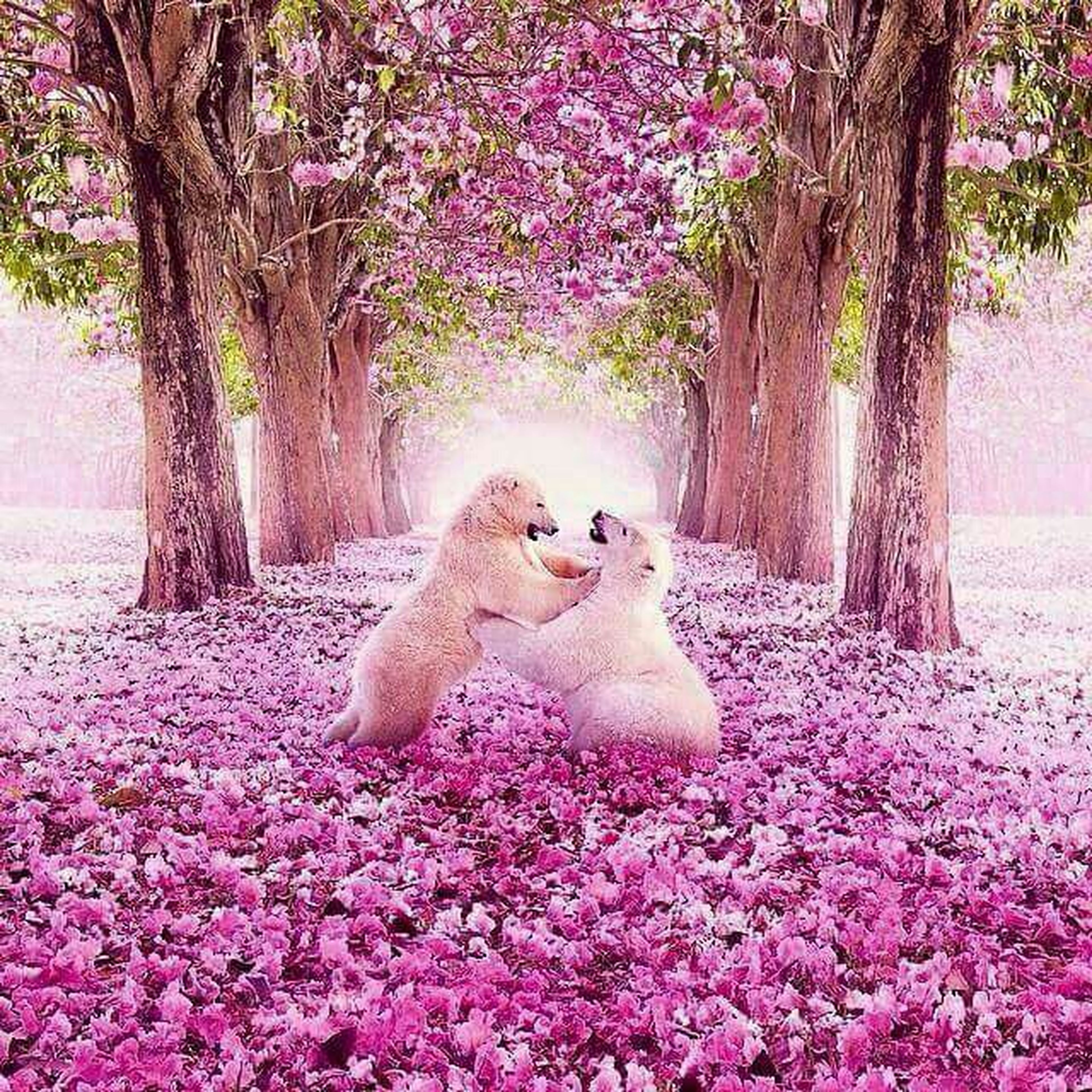 animal themes, one animal, flower, animals in the wild, tree, wildlife, bird, beauty in nature, growth, nature, full length, sunlight, park - man made space, plant, outdoors, day, pink color, side view, fragility, no people