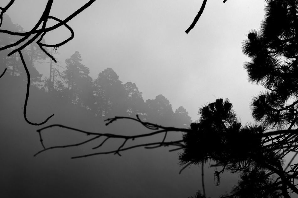 Mist forest Focus On Foreground Foggy Foggy Morning Misty Misty Morning Misty Mountains  Outdoors Scenics Tranquil Scene Weather