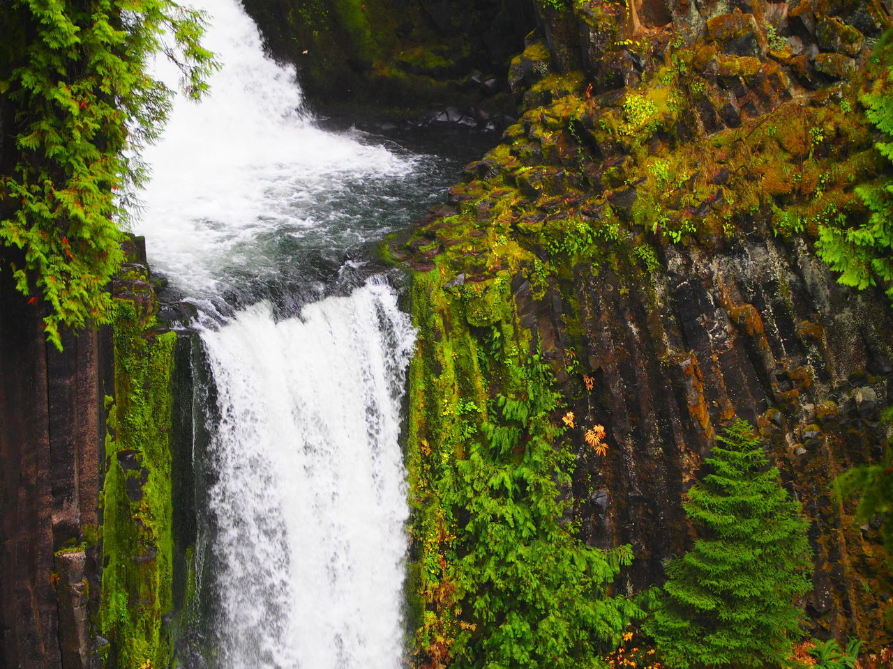 Protecting Where We Play remote Tokatee Falls carves out a punch bowl through columnar basalt. Volcanoes Mt. Mazama Landscape_photography Landscape_Collection Waterfall Oregon Tokatee EyeEm Waterfalls