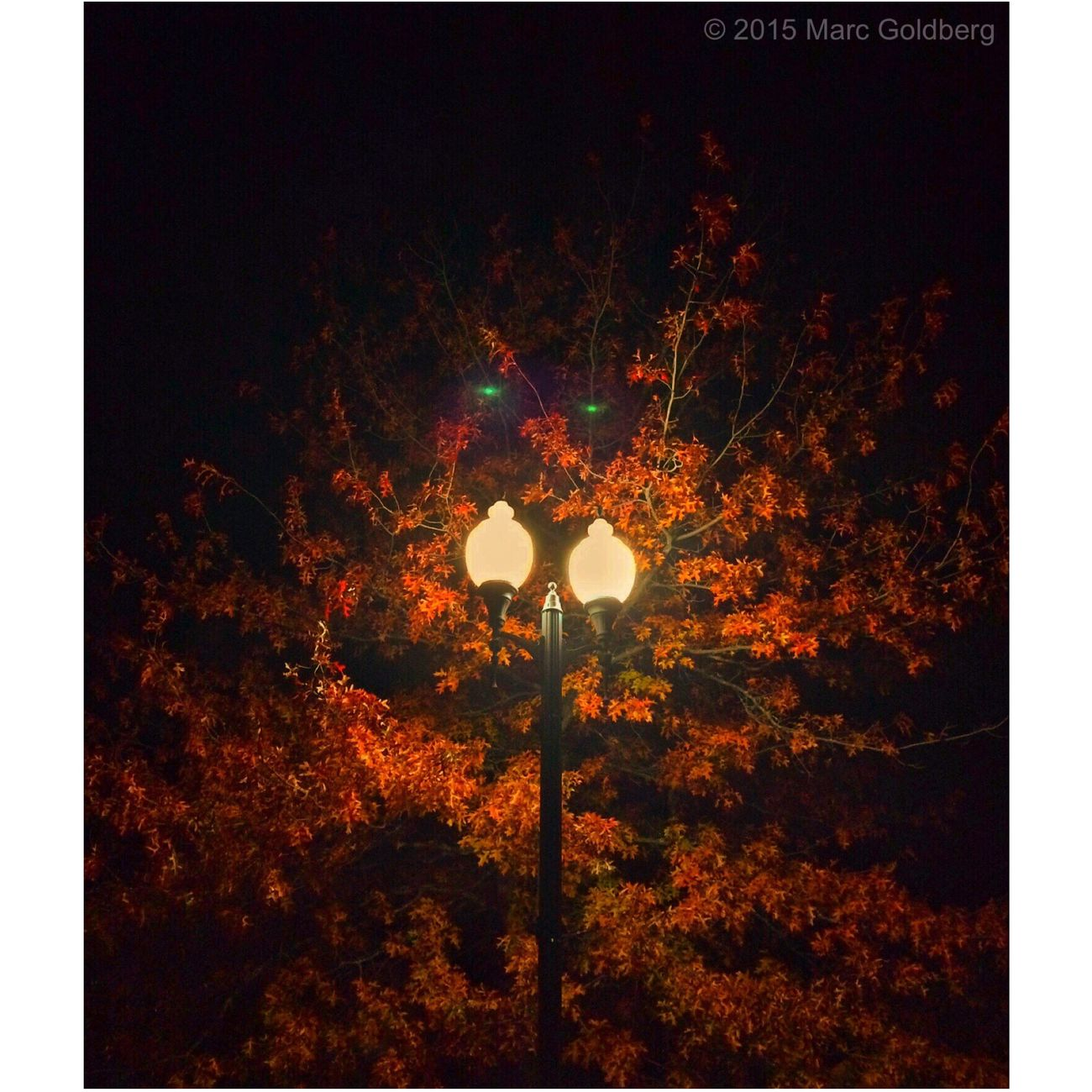 """Night Eyes,"" Reilly-Mumford Park, Sherrill, New York, 10/31/15 Halloween Night Light Night Lights Lens Flare Fall Fall Beauty Autumn Autumn Colors Trees"