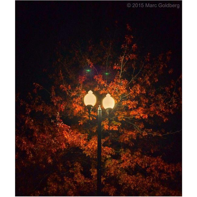 """Night Eyes,"" Reilly-Mumford Park, Sherrill, New York, 10/31/15 Halloween Night Light Night Lights Lens Flare Fall Fall Beauty Autumn Autumn Colors Trees"