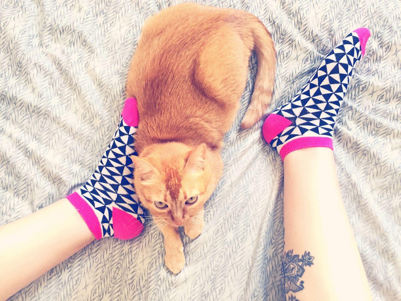 TK Maxx Socksie Bestshot Love Babycat Catlovers Domestic Cat No People