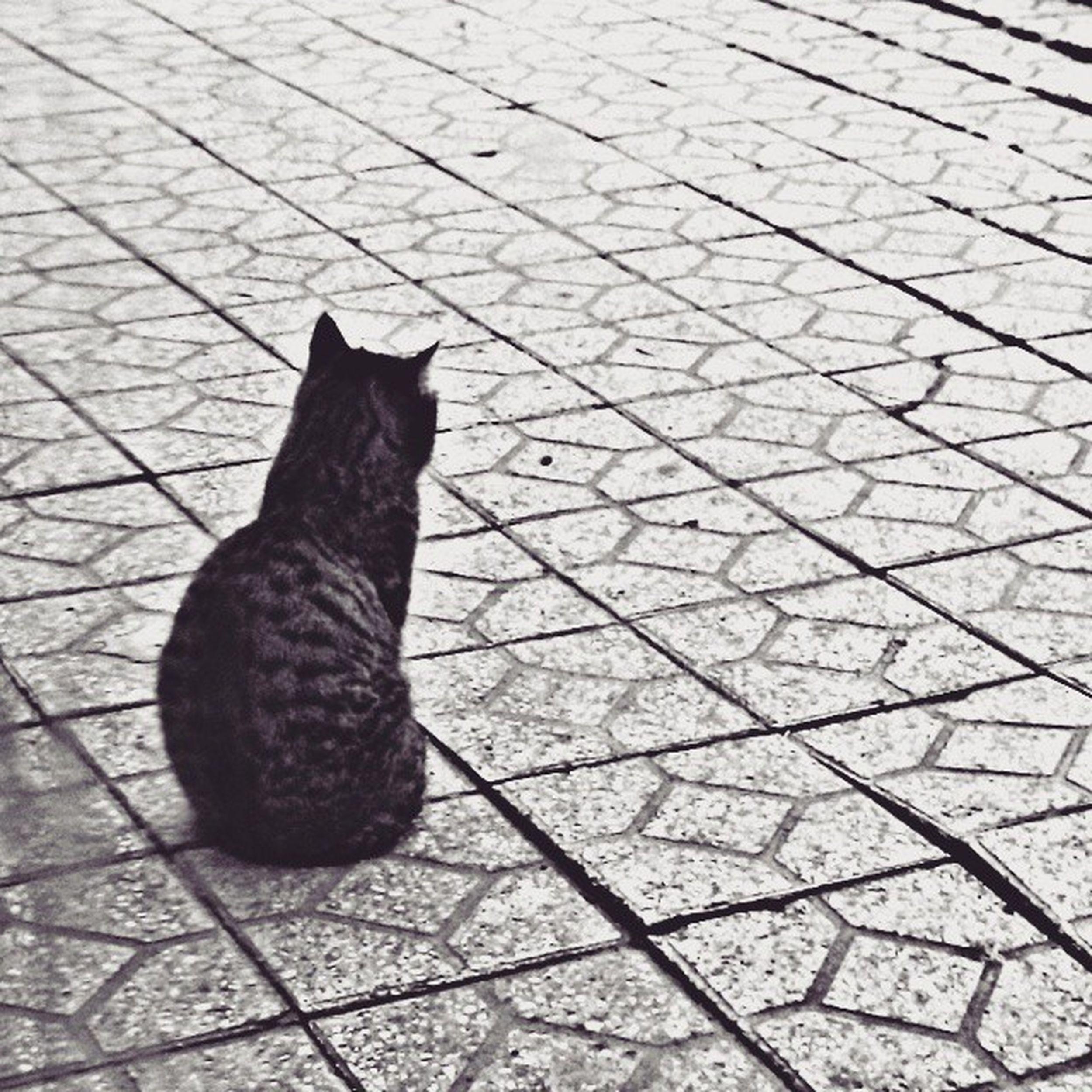 آنچه گفتم شدي و آنچه نگفتم بودي گربه ي مرده شدم،گريه ي جفتم بودي نه لبي مانده به بوسه،نه لبي روي لبي منم و استرس و خاطره هاي عصبي مهدي_موسوي My Best Photo 2015