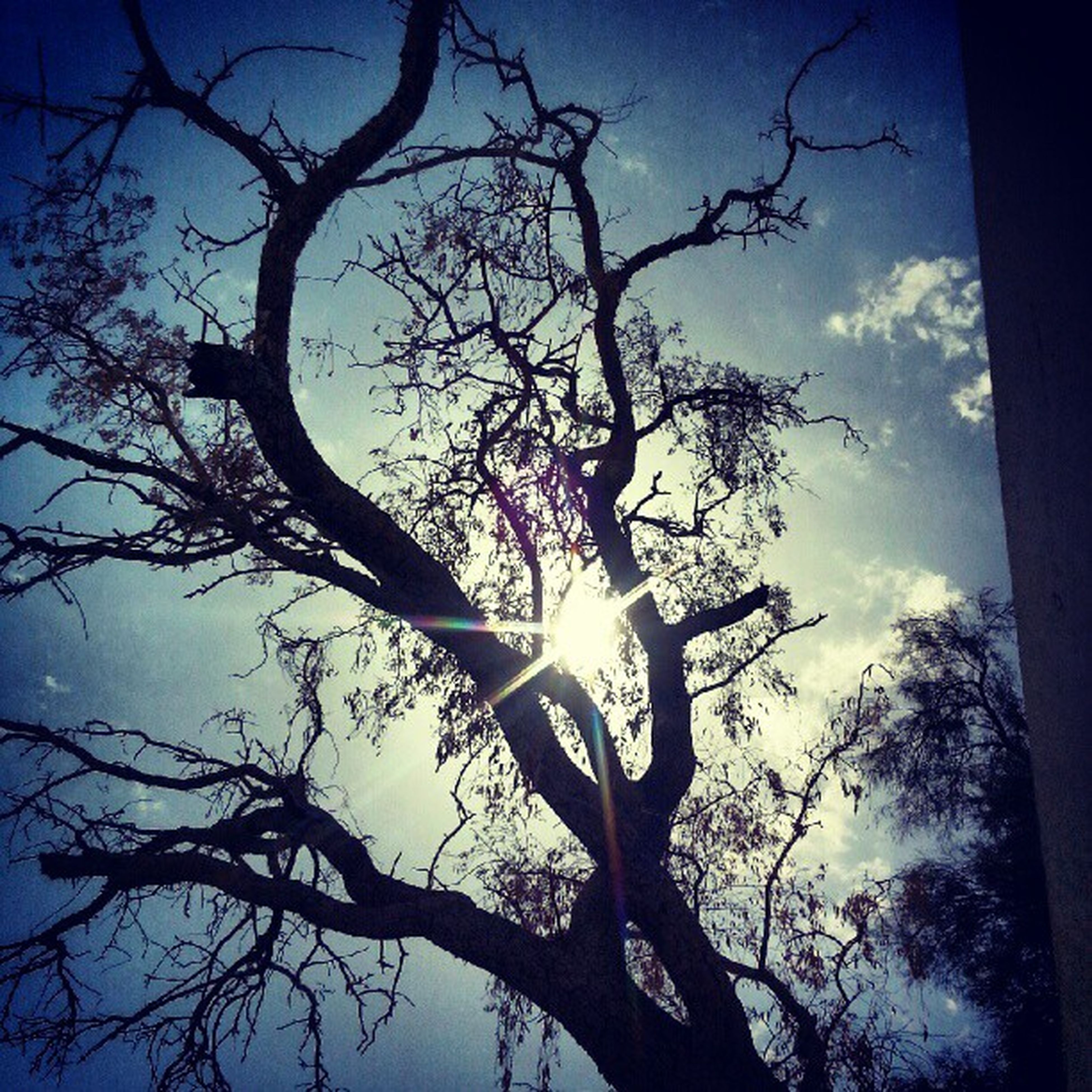 low angle view, tree, bare tree, branch, silhouette, sky, tree trunk, nature, tranquility, beauty in nature, scenics, blue, sun, sunlight, outdoors, cloud - sky, no people, tranquil scene, growth, back lit