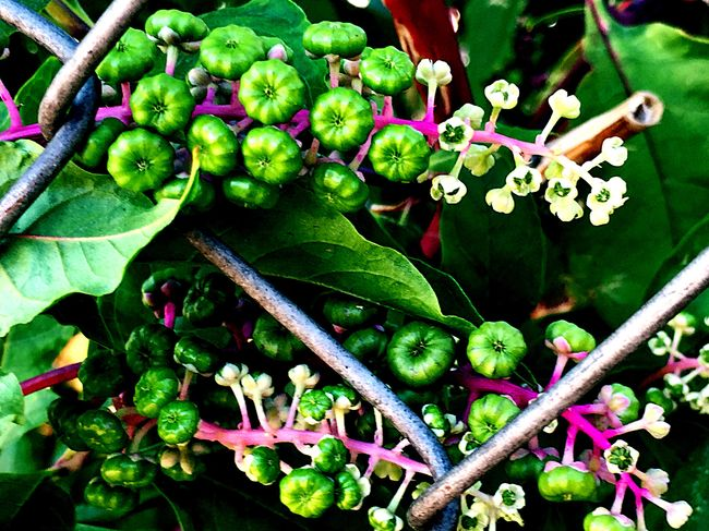 What kind of flower is this? Green Color Freshness Wildflowers Hot Pink Green