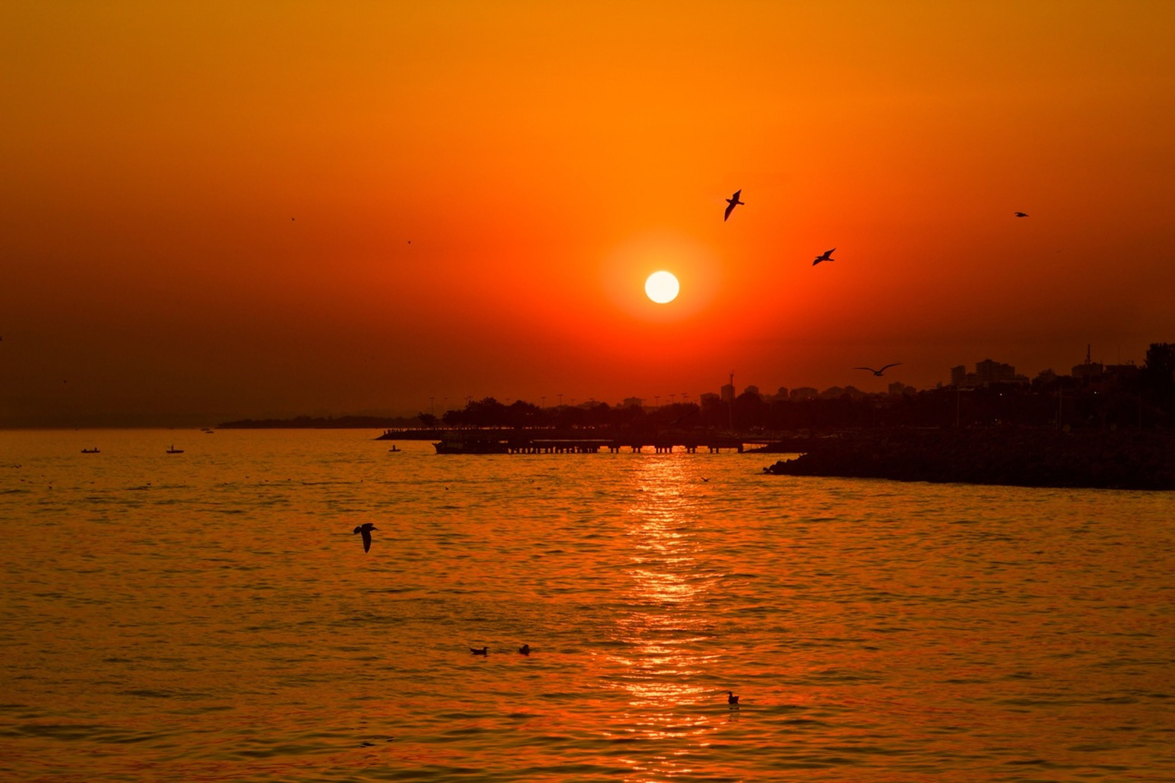 sunset, bird, water, sun, orange color, animal themes, sea, flying, scenics, wildlife, animals in the wild, waterfront, silhouette, tranquil scene, beauty in nature, tranquility, idyllic, reflection, nature, sky