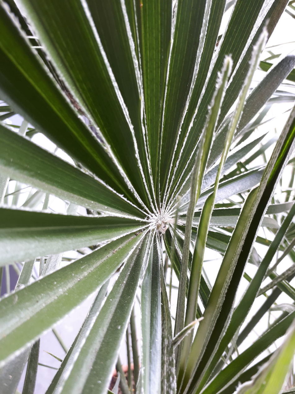 Growth Nature Green Color Leaf No People Plant Backgrounds Outdoors Full Frame Close-up Beauty In Nature Day Palm Tree Tree Frond Freshness