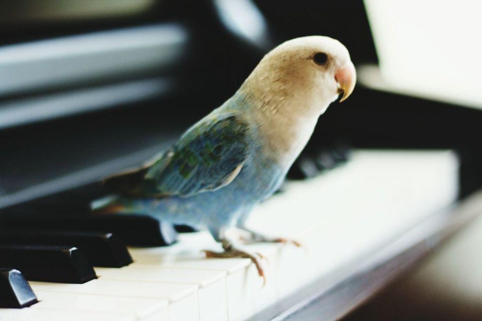 Beautiful stock photos of parrot, Animal, Animal Themes, Avian, Beak