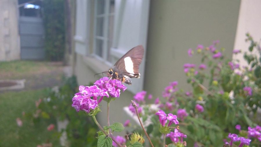 Walking Around Curepipe Mauritius Butterfly