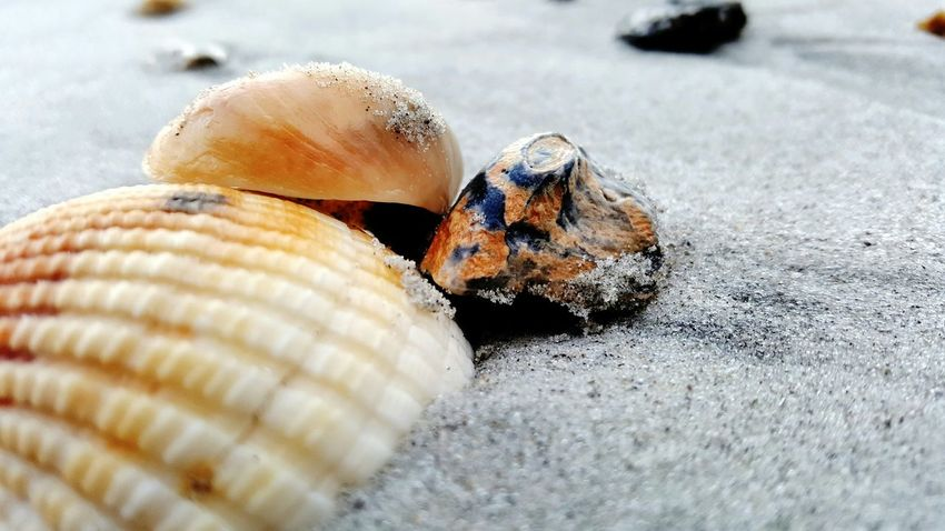 PhotographybyTripp Smartphone Photography Samsung Galaxy Note 5 Camera360Ultimate EyeEm Best Shots Eyeem Beach Shots Seashell Seashell, By The Sea Shore Manual Focus EyeEm Best Shots - Macro / Up Close