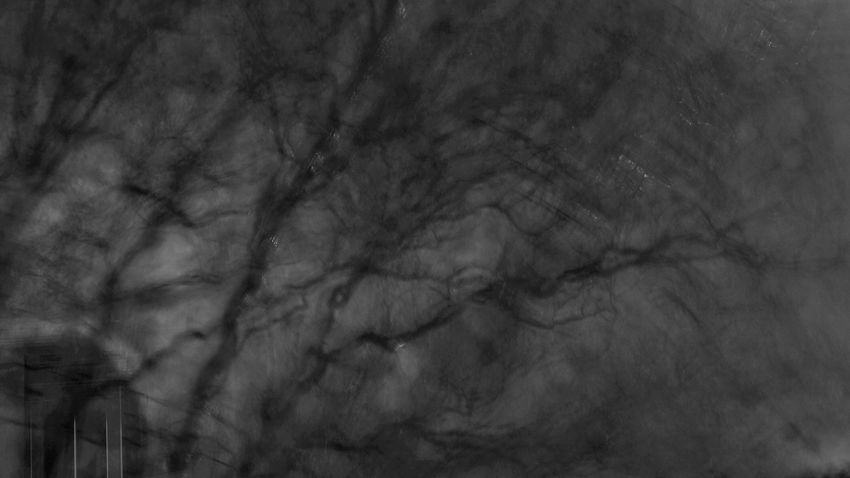 Backgrounds Textured  Abstract Close-up No People Tree Nature Sony A6000 Sonyalpha B&w Black & White Blackandwhite Outdoors Storm Rain Rainy Glitch Glitchart Night