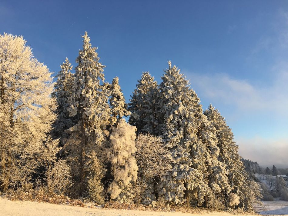 Nature Tree Beauty In Nature Scenics Tranquility Sunlight Outdoors Cold Temperature Winter Growth Snow Tranquil Scene No People Day Clear Sky Sky Landscape